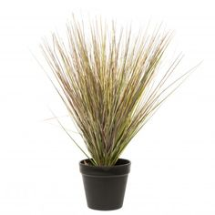 Intratuin kunstplant Helmgras D 33 H 40 cm Herbs, Plants, Products, Herb, Plant, Beauty Products, Planting, Planets