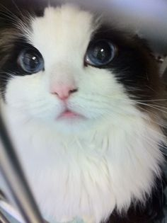 Absolutely precious! This cat is prettier then a lot of people... Officially uglier than a cat..