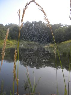 goatsandthegirl:    Spiderwebs at dawn.  Sometimes very early mornings are unexpectedly spectacular.  -Lily