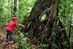 #Amazonie #Guyane #tournage #ArthurAutourDuMonde #découverte #voyage #lézard