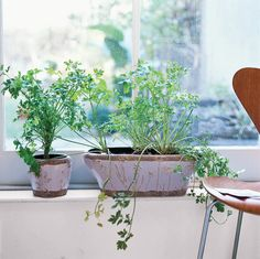 green herbs in window with emerald green undertones, pantone arcadia, mint green, blue-green, emerald green, lavender pot