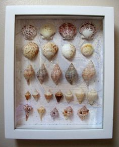 Sea Shell Shadow Box: From shells  collected at Sanibel Island, Florida / Dorothy Reinhardt Designs
