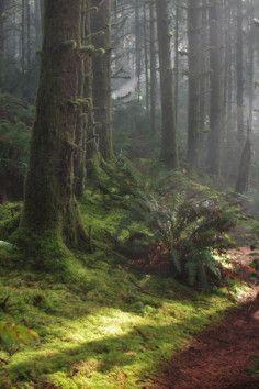 La Pine State Park, home to Oregon's largest ponderosa pine.