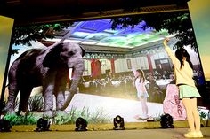 Chinese cultural icons plead for the lives of elephants in media blitz