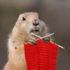 Mrs. Groundhog Knits ... 6 more weeks?!  Hahaha!