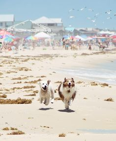 Is there anything in the world happier than a dog on a beach? Maybe a dog with a playmate on the beach.
