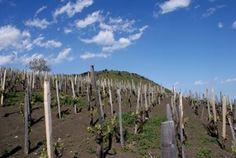 Italian Wine Series: Cristiano Garello, Tenute Sella & Biondi Etna @WHWC 3/31/12 2-6 PM