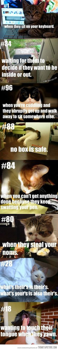 Cat people problems…