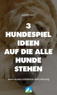 3 Hundespiel Ideen auf die alle Hunde stehen! Im #Haustier #Notfallkarte #Hunde #Blog