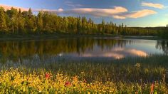 4 SEASONS DVD - RELAXING VIDEO'S OF SUMMER SCENERY WITH NATURE SOUNDS