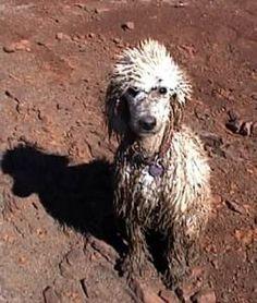 Layla! Ha ha ha ha! The mud bath...h-e-l-p!