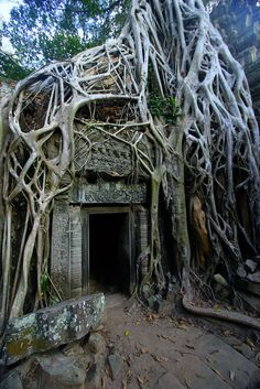 Photographic Print: Tree roots growing on Ta Prohm temple (Rajavihara) ruins, Angkor, UNESCO World Heritage Site, Siem by Jason Langley : Angkor Wat, Abandoned Buildings, Abandoned Places, Haunted Places, Laos, Audley Travel, Kirchen, Insta Photo, Nepal
