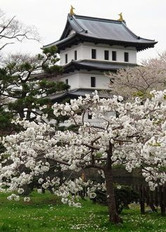 Cherry blossom in Matsumae, Hokkaido, Japan