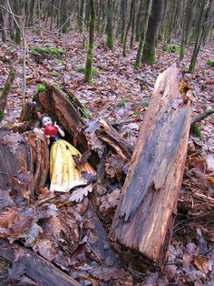 Looks like a geocacher discovered where Snow White lays sleeping.  :)  A good cache for kids, or any Disney fans.  #IBGCp