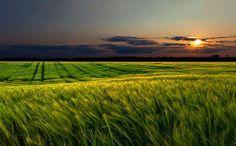 Agrarheute berichtet in einem Artikel über Bodenpreise in der Landwirtschaft und wo der Boden in Bayern am teuersten ist. Außerdem sinken die Unternehmensergebnisse in der Landwirtschaft in Baden-W…
