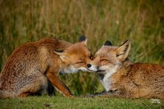Mother and daughter by Yvonne van der Meij on 500px
