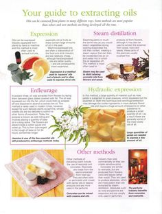 Mind, Body, Spirit Collection - Your Guide To Extracting Oils Healing Herbs, Natural Healing, Natural Medicine, Herbal Medicine, Herbal Remedies, Natural Remedies, Essential Oil Blends, Essential Oils, Herbs For Health
