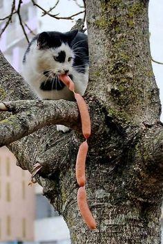 Les chats sont des voleurs de bouffe!