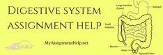 Digestive system assignment help