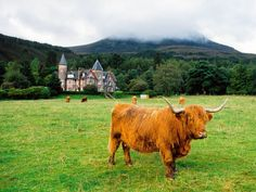 "I love highland cows!  And I could totally see myself living in that ""house"" in the background!"