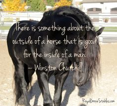 horse sayings | All images are copywrite by Royal Grove Stables. )