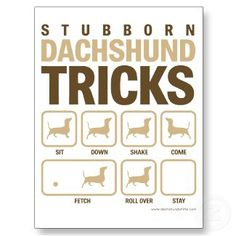 stubborn dachshund tricks...so true for Doc and Wyatt!  My boys are stubborn just like this!!