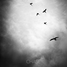 Chase #birds #parakeet #eagle #chase #sky #monochrome #bw #deepstudio #instafit www.deep.studio