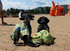 Dachshund Firefighter & Fire Truck | Crusoe and Oakley's Fire Drills