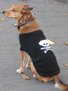 Free Knitting Pattern for Pirate Dog Coat - I-Matey Dog Coat features a skull and crossbones intarsia motif. Sizes Extra Small, Small, Medium, Large Designed by Bernat Design Studio. Pictured project by naharbeit Dog Sweater Pattern, Crochet Dog Sweater, Mittens Pattern, Dog Pattern, Knitting Patterns For Dogs, Free Knitting, Knit Patterns, Large Dog Sweaters, Small Dog Coats