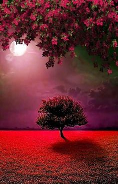 red/ purple landscape