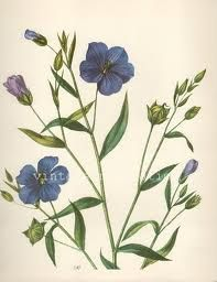 vintage flower prints - Google Search