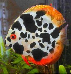 Beautiful coral fish