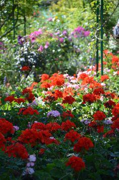 Giverny jardin de monet jardin d 39 eau cours d 39 eau ru for Jardins anglais celebres