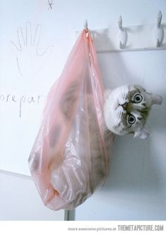 Cat in the bag...