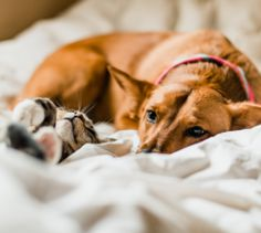 Mind-Blowing Benefits of CBD for Dog and Cat Cancer — Innovet Pet Products I Best Hemp Products for Pets Pet Loss Grief, Dog Stock Photo, Medication For Dogs, Sick Dog, Animal Facts, Losing A Pet, Cat Breeds, Mind Blown, Animals And Pets
