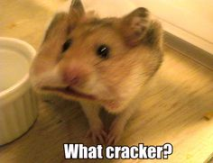 what cracker?