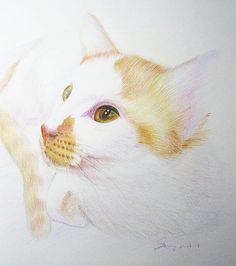 Custom Pet Portraits - Original Color Pencil Art - Brown Cat