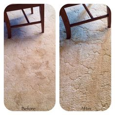 For getting pet stains and odors out of carpet...