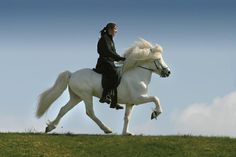 """Tolt. A former neighbor, an Icelandic man with a herd, called this """"like riding on a cloud."""" And he's right!!"""