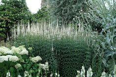 Weißer Garten Sissinghurst the white garden at sissinghurst garden white
