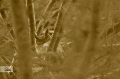 Owl Watch by hollykarp on 500px
