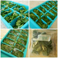 "Freezing herbs - perfect way to preserve herbs from your garden or save ""leftover"" herbs sitting in the fridge!"