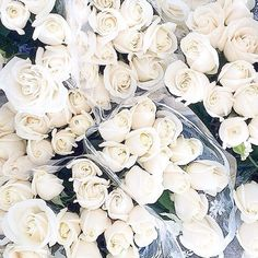 White roses #flowers #blooms