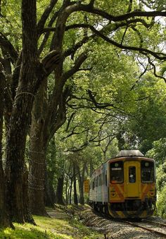 Green tunnel along Tourist Railway Tour Route in central Taiwan
