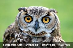 Bird Photography Tips #photography #phototips http://www.exposureguide.com/bird-photography-tips.htm