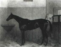 Achievement a dark bay racehorse in a loose box by Harry Hall