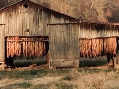 Tobacco barn in fall. Jabez, KY