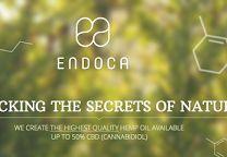 Endoca com - Google+