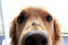 Watch this puppy proposal for engagement ideas.
