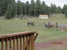 Horse Property for Sale in Coconino County in Arizona. TWO HOMES, EACH w/THEIR OWN PARCEL # FOR FUTURE RESALE, NO NEED TO SPLIT. NEWER, 1-Level CONTEMPORARY CABIN AND A CHARMING, Mom-in-Law, Guest House SISTER CABIN IN IN THE COOL PINES OF FLAGSTAFF! Home #1 has an Open GREAT ROOM, DINING AND KITCHEN. Manufactured construction w/concrete footings and permanent foundation.